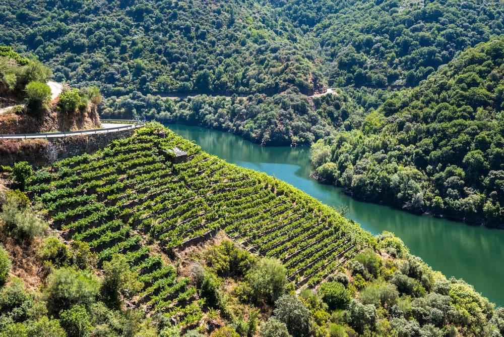 El vino, uno de los negocios con mayor éxito de nuestro país