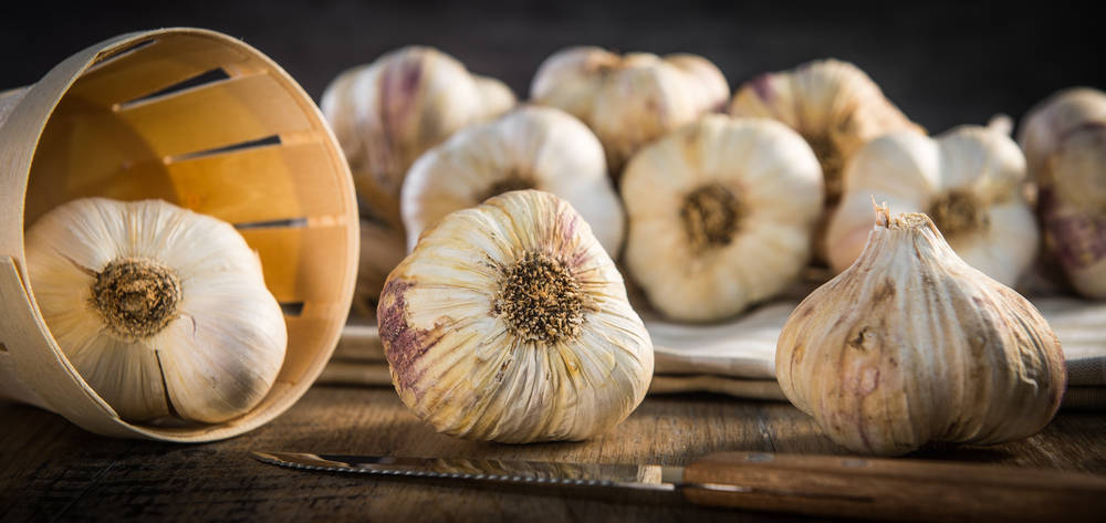Imperio Garlic, líder en el sector del ajo